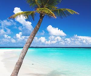 beach, beautiful, and luxurious image