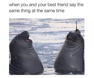 best friend, fat, and jokes image
