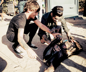 louis, one direction, and zayn image