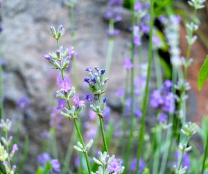 lavender, nice, and green image