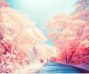 beautiful, paradise, and pink image