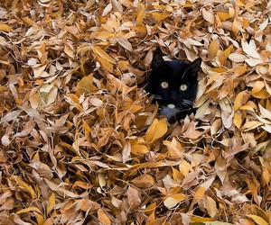 cat, kitten, and leaves image