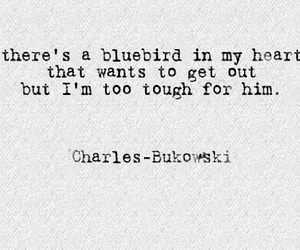 bird, bluebird, and poem image