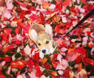 american beauty, animals, and autumn image