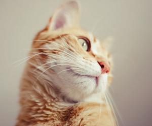 cat, cute, and gato image