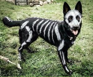 dog, Halloween, and black image