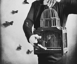 butterfly, black and white, and cage image