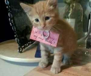 cute, cat, and ring image