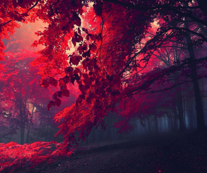 red, beautiful, and tree image