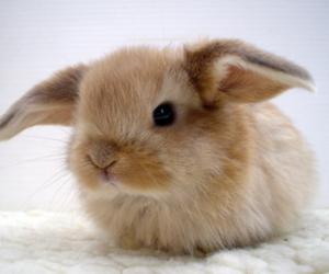 bunny, rabit, and conejito image