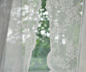 flower, window, and windows image
