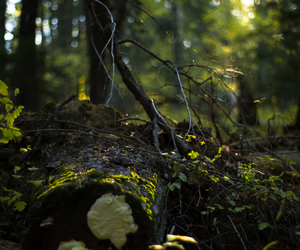 forest, moss, and mushroom image