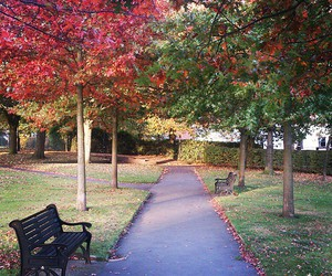 autumn, leaves, and manchester image