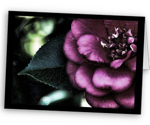 camellia, flower, and card image