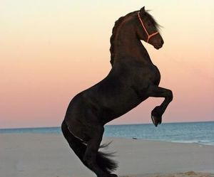horse, beach, and animal image
