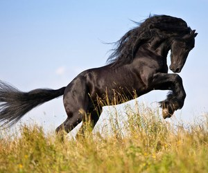 beautiful, horse, and galop image