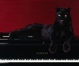 piano and black image
