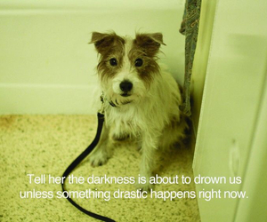 dog, quote, and jack russell image