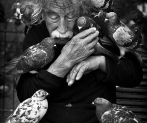 art, photography, and pigeons image