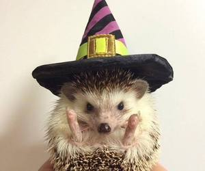 Halloween, hedgehog, and animal image