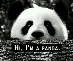 panda, animal, and hi image