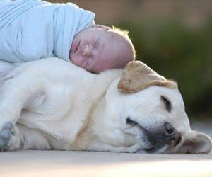 baby, dog, and animals image