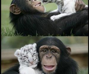 animal, cute, and monkey image