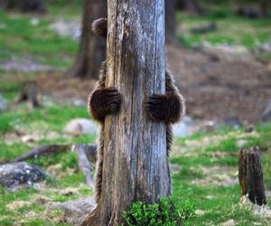bear, animal, and tree image