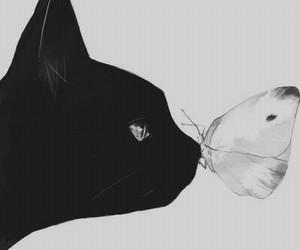 animals, black, and love image