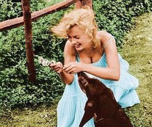 beautiful, dog, and happiness image