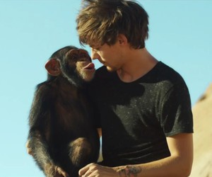 chimp, cute, and steal my girl image