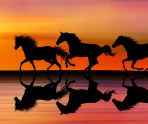 horse, animal, and sunset image
