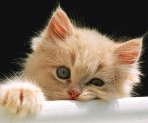 adorable, eyes, and kitten image