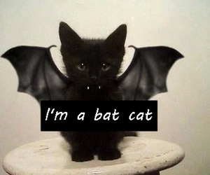 bat, best friend, and cat image