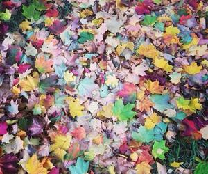 autumn, colourful, and colours image