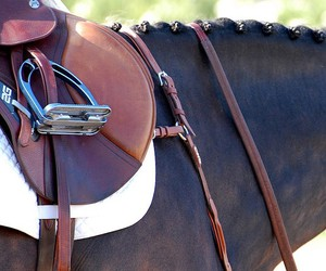 horse, saddle, and equestrian image