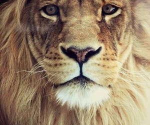 king, lion, and wallpaper image