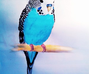 animals, blue, and cute image