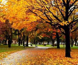 autumn, rainy, and cold image