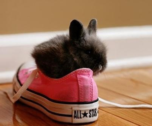 rabbit, converse, and bunny image