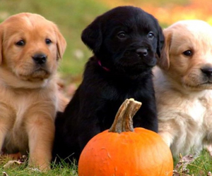 puppies, dog, and cute image