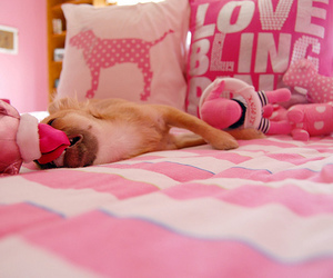 pink, dog, and cute image