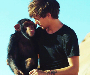 one direction, louis tomlinson, and monkey image