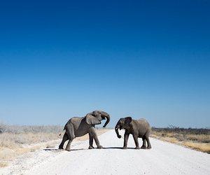 animal, elephant, and travel image