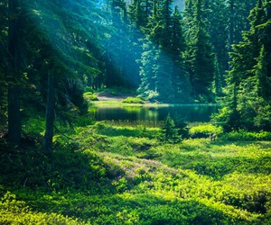 freedom, green, and meadow image