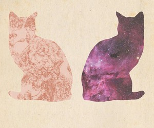 cat, galaxy, and animal image
