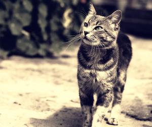 animals, cat, and gray image