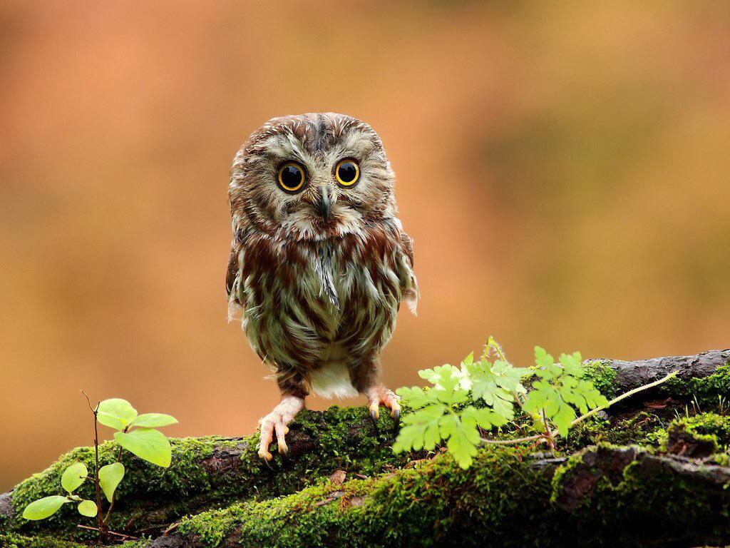 owl and big feet image