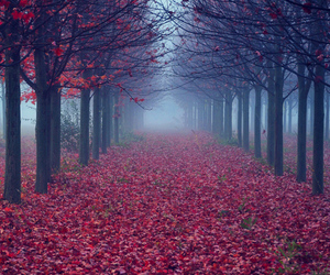 trees, autumn, and forest image