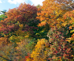 autumn, leaves, and outdoors image